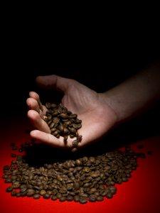 Kaffeebohnen rieseln aus der Hand.